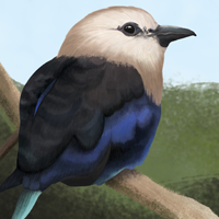 Blue-Bellied Rollers Poster